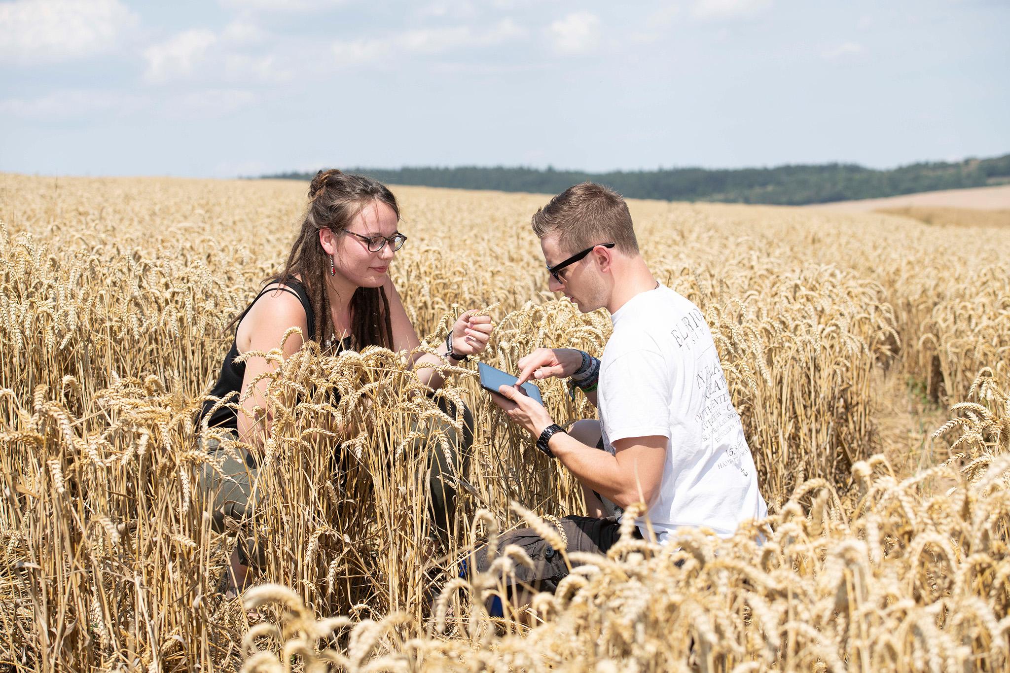 Landwirtschaft Studieren