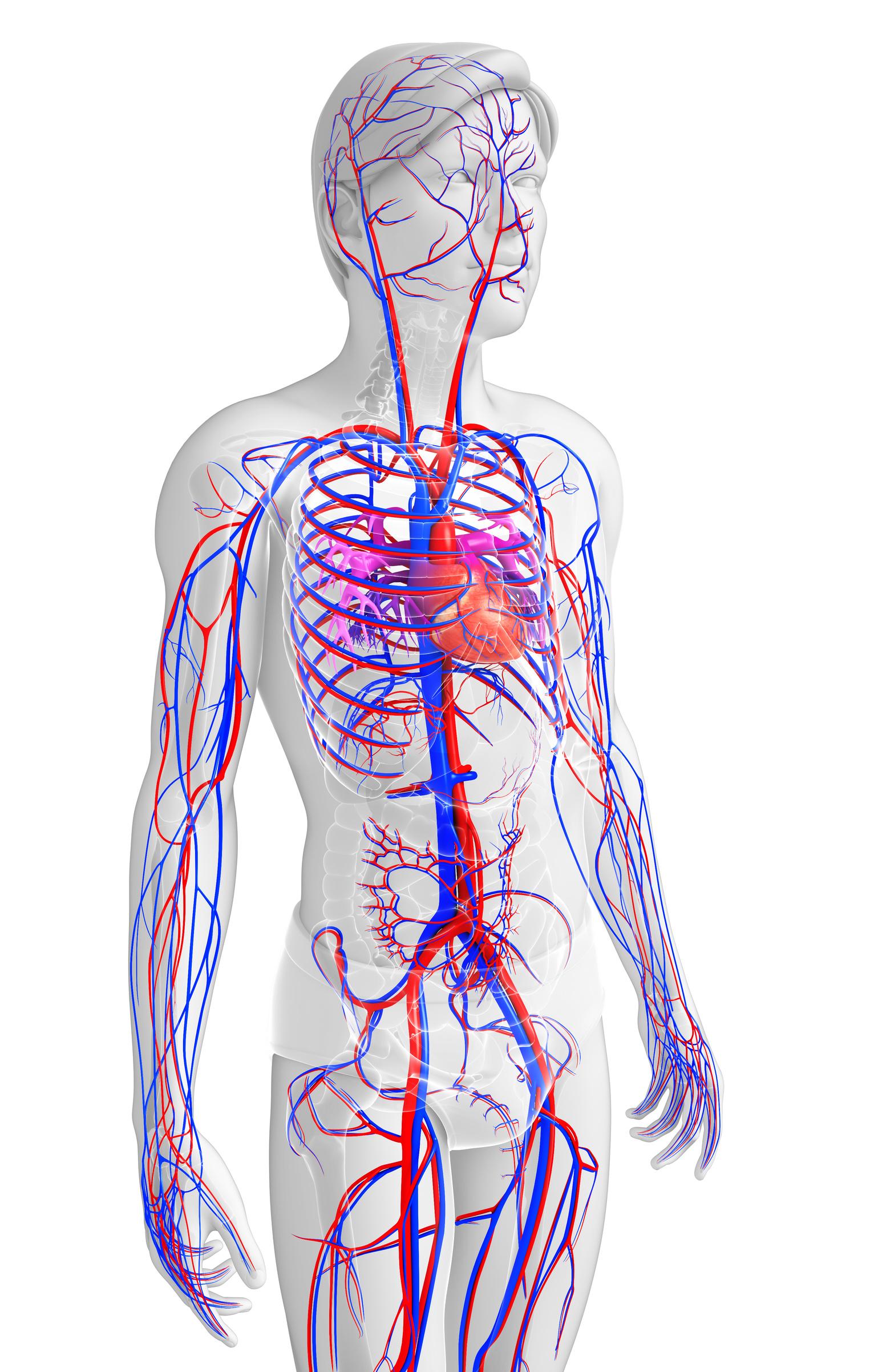 Ausgezeichnet Mckinley Menschliche Anatomie Zeitgenössisch ...