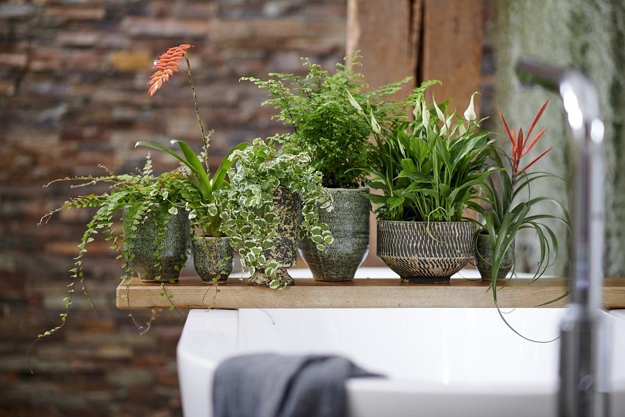 Das Grune Badezimmer Pflanzenfreude De Plant Mag By Igor Josifovic Presseportal