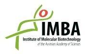 IMBA Institute of Molecular Biotechnology