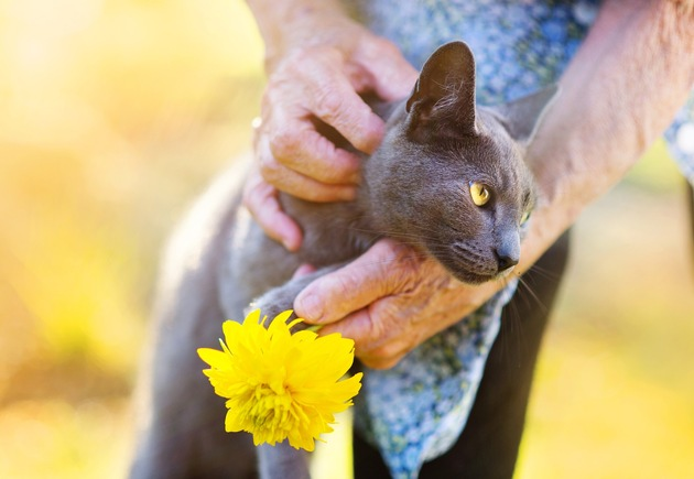"""Auch im Alter glücklich. Veröffentlichung in Verbindung mit der Pressemeldung """"ZZF gibt Tipps für den Umgang mit der alternden Katze"""" honorarfrei. Copyright: WZF / panthermedia halfpoint"""