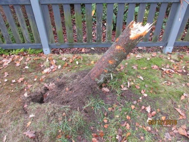 Zerstörter Baum