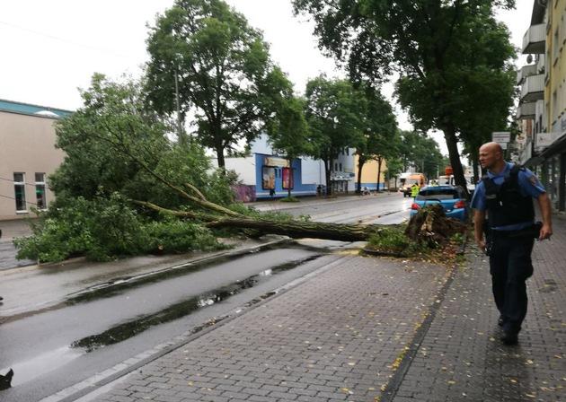 Das Foto zeigt den umgestürzten Baum in der Weserstraße.