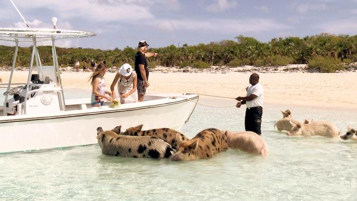"""Familie Geiss ist ganz begeistert von der vielfältigen Wasserwelt der Bahamas. Da lassen es sich Carmen, Robert und die Töchter Shania und Davina natürlich nicht entgehen, mit den berühmten schwimmenden Schweinen plantschen zu gehen. Eine Doppelfolge """"Die Geissens - Eine schrecklich glamouröse Familie!"""" am Montag, 3. September 2018, um 20:15 Uhr bei RTL II. Weiterer Text über ots und www.presseportal.de/nr/6605 / Die Verwendung dieses Bildes ist für redaktionelle Zwecke honorarfrei. Veröffentlichung bitte unter Quellenangabe: """"obs/RTL II"""""""