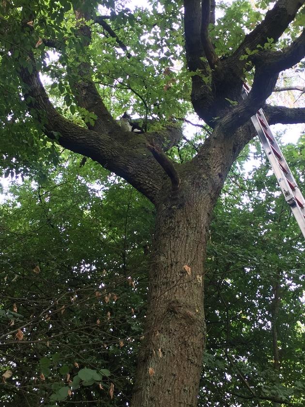 Die Feuerwehr rettete eine Katze, die sich schon zwei Tage in einem Baum befand.
