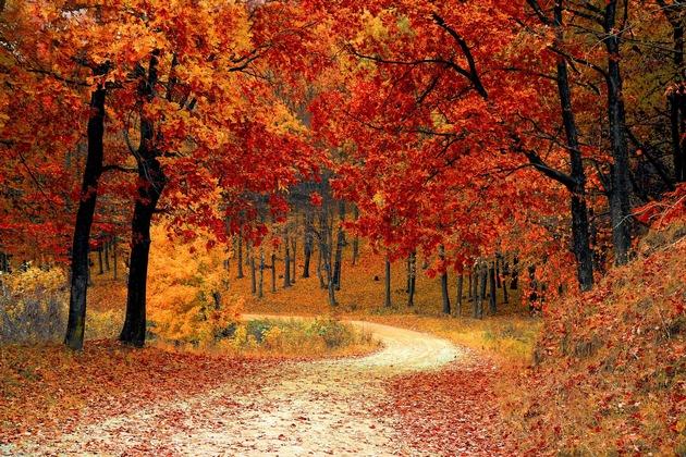 Anhang Herbst