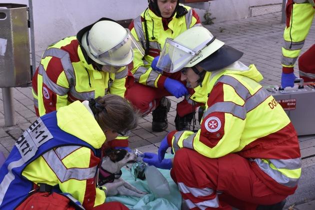 Die Kräfte des Rettungsdienstes mit dem betroffenen Hund