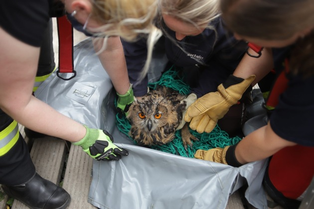 Uratowana sowa wypoczywa w schronisku dla dzikich zwierząt