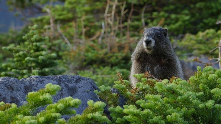 Wildes Amerika: Im Herzen der USA (© National Geographic)