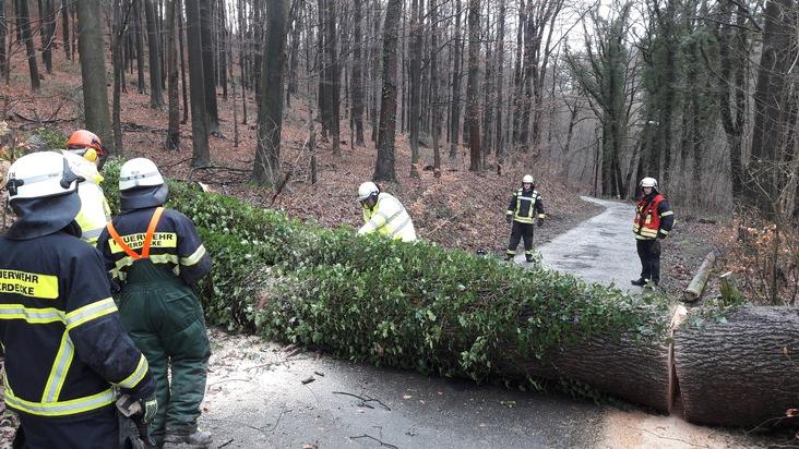 Baum am Kallenberger Weg umgestürzt,