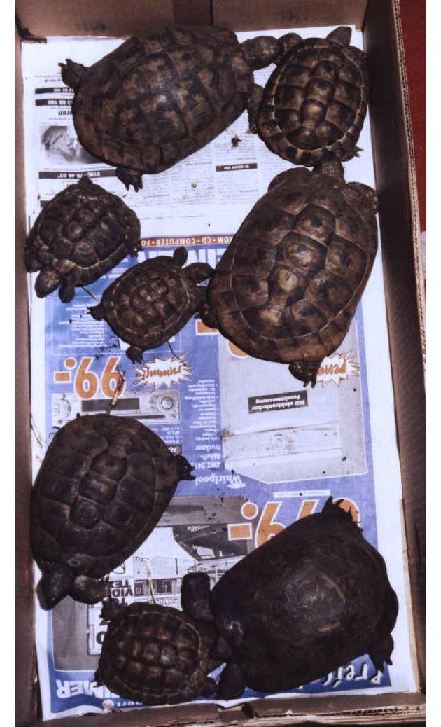 POL-F: Polizeipressebericht vom 03. Feb. 2003