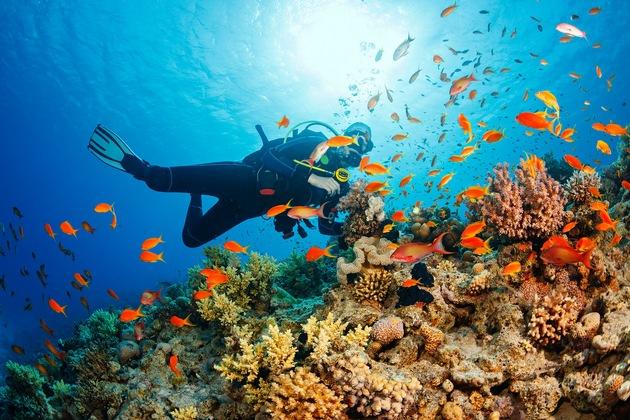 Egal ob mit der Schnorchelbrille oder der Taucherausrüstung - das Beobachten der vielen Meeresbewohner lohnt in jedem Fall.
