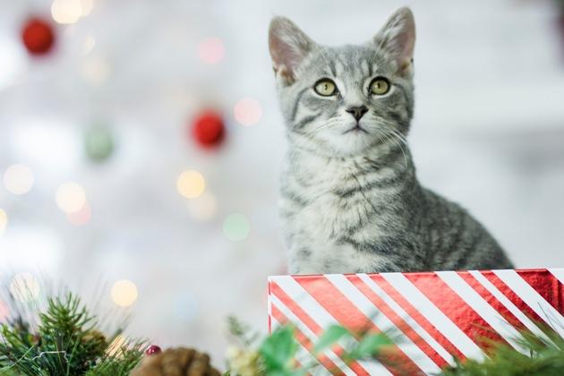 Haustiere sollten zu Weihnachten nicht verschenkt werden. Vielleicht lieber  Ratgeber über Katzen & Co. ? danach kann man sich zusammen für ein Tier entscheiden. Foto: Mein Haustier/iStock/fatCamera