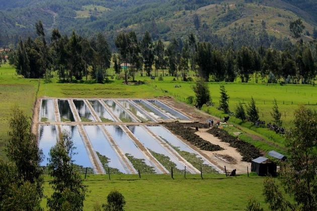 Grünfilter in der Gemeinde Susa in Kolumbien