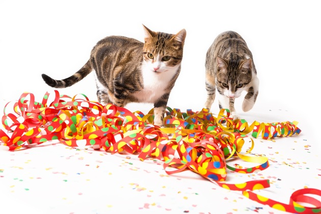 Die Karnevalszeit bedeutet für viele Tiere meist Stress: Lärm, Menschenmengen und Glasscherben bringen Angst für die Tiere mit sich. Foto: Mein Haustier/IStock/walik