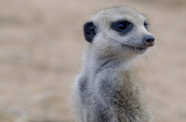 Love Nature kommt zu Sky: Hunderte Programmstunden von hochkarätigen Natur- und Wildlife-Dokumentationen bald auf Abruf