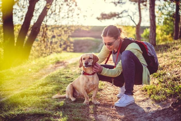 Nach jedem Spaziergang sollten Hunde gründlich nach Zecken abgesucht werden und diese schnell entfernt werden. Foto: Mein Haustier/iStock/Kerkez