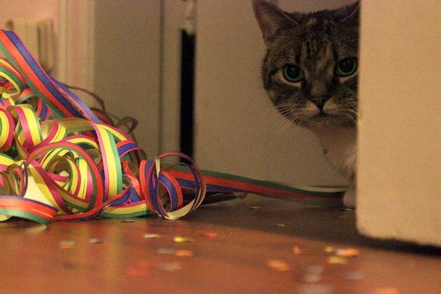 Freigänger-Katzen sollten Silvester und Neujahr aus Sicherheitsgründen in der Wohnung verbringen - dort können sie nicht verschreckt werden. Foto: Mein-Haustier/iStock/MarthaTinta