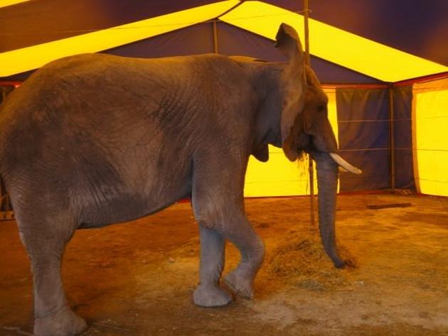 """Das Stallzelt des Elefanten zeigte nach dem Unfall keine Spuren eines Ausbruchs. Weiterer Text über ots und www.presseportal.de/pm/103332 / Die Verwendung dieses Bildes ist für redaktionelle Zwecke honorarfrei. Veröffentlichung bitte unter Quellenangabe: """"obs/Aktionsbündnis """"Tiere gehören zum Circus""""/Rainer Borchert"""""""