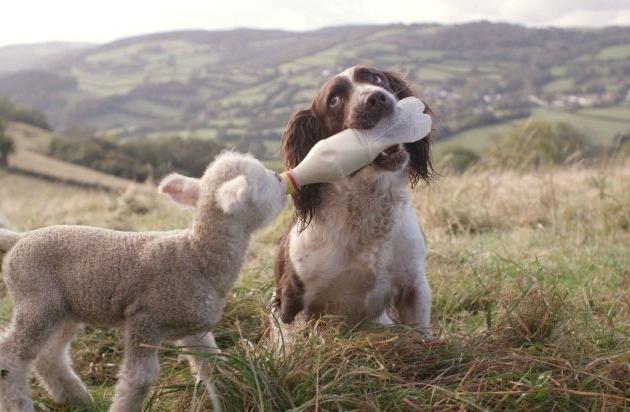 Partner mit hund kennenlernen