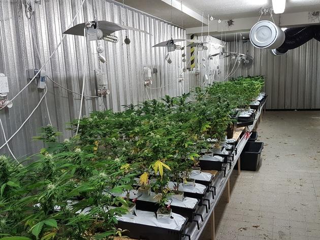 Plantage2