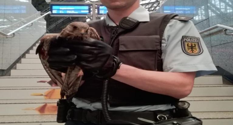 Ein Kölner Bundespolizist kümmert sich um den verletzten Vogel!