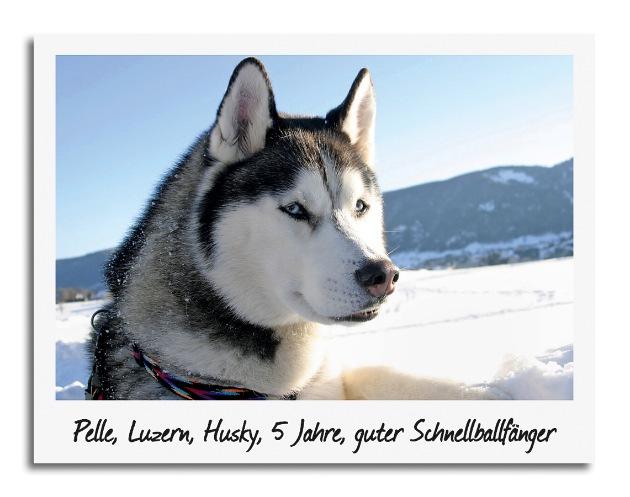 Jedes Tier hat Star Appeal! Swisslos veranstaltet grosses Tierfoto-Casting