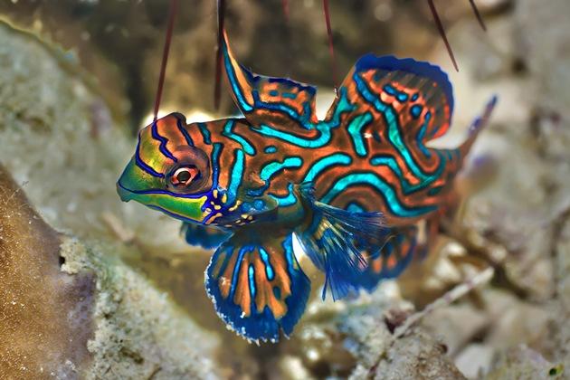 Zum Tag der Fische gibt es die buntesten und exotischsten Aquariumbewohner