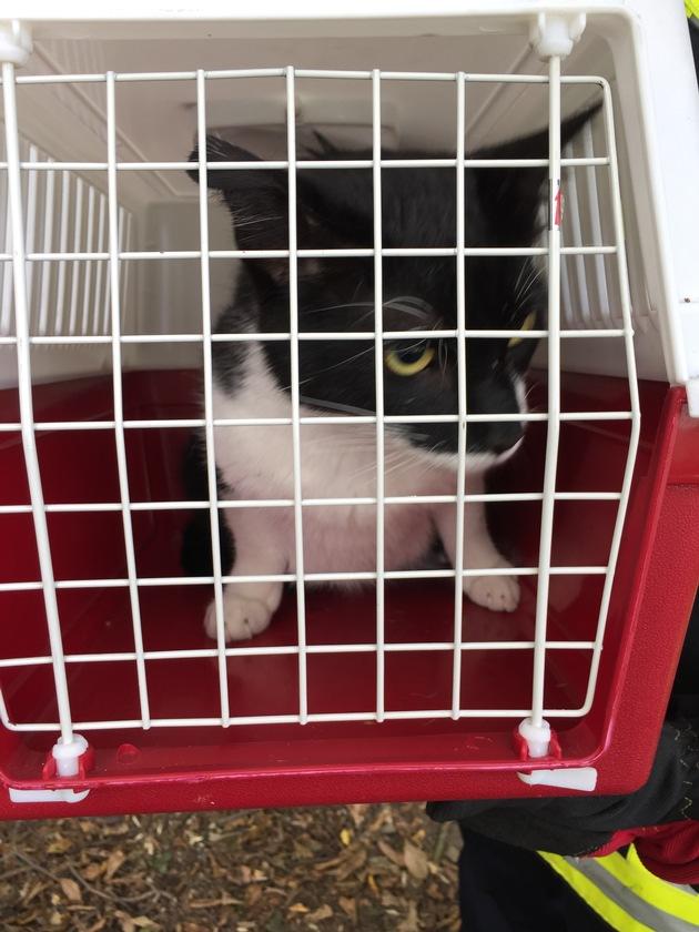 Feuerwehr rettete junge Katze, die sich schon zwei Tage in einem Baum befand.