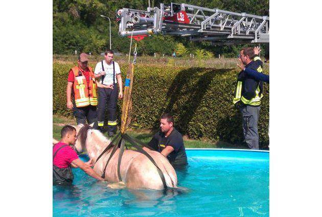 POL-DA: Ober-Ramstadt /Nieder-Modau: Da steht ein Pferd im Pool