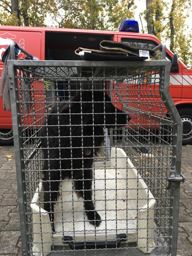 POL-PPRP: Ludwigshafen - Festnahme eines freilaufenden Hundes