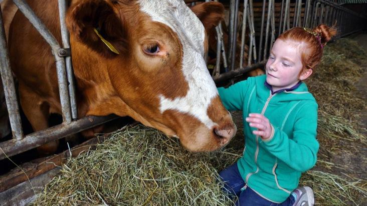 Viele Kinder können zum ersten Mal eine Kuh streicheln.