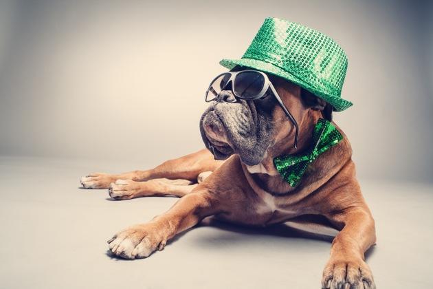 Die Mein Haustier-Leser sind ganz klar gegen Verkleidungen für Tiere ? diese lassen Hund und Katze nur lächerlich dastehen. Foto: Mein Haustier/IStock/w-ings