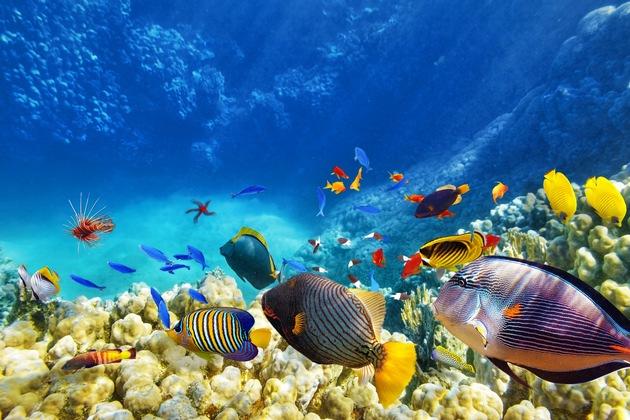 Zahlreiche bunte Fische in verschiedenen Größen und Formen schwimmen in den Riffs der Malediven.