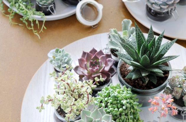 Sukkulente ist Zimmerpflanze des Monats Juni Interieur Design Tipp Sukkulenten als  ~ 01004223_Sukkulenten Als Zimmerpflanze