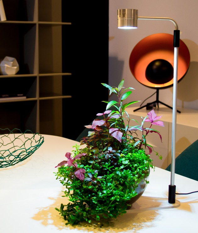 Immer mehr Pflanzen-Freunde begeistern sich für den grünen Trend aus Japan: Wabi Kusa / Veröffentlichung für redaktionelle Zwecke honorarfrei. Copyright: WZF/Frederic Fuss