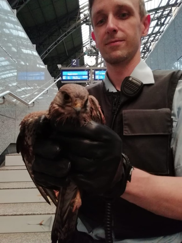 Bundespolizist kümmert sich um verletzten Falken!