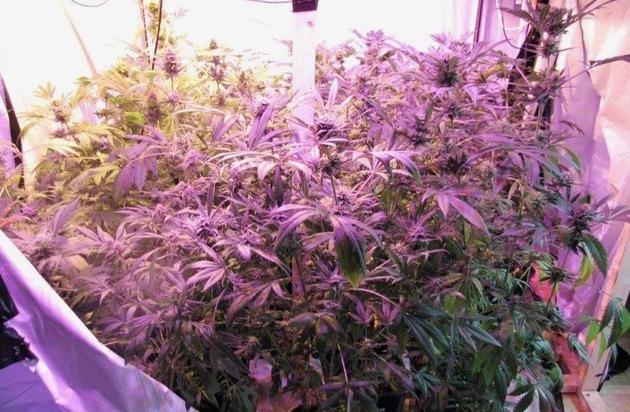 POL-SO: Rüthen - Cannabispflanzen in Mietwohnung