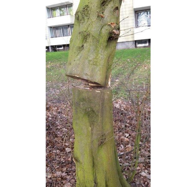 POL-BI: Baumfrevel in Baumheide