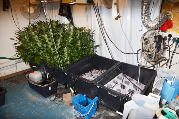 Indoor-Plantage