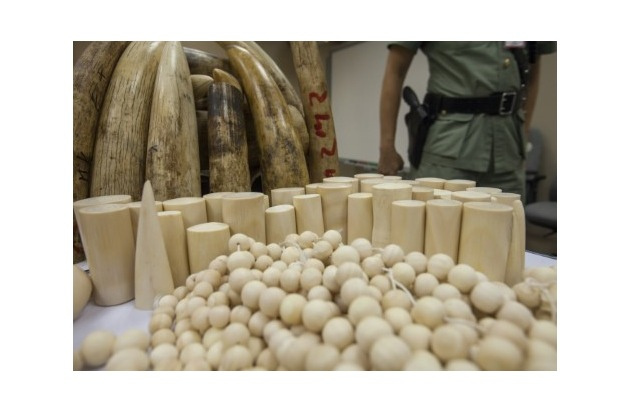 (c) IFAW/ALEX HOFFORD  Von Zollbehörden in Hong Kong konfisziertes Rohelfenbein und bearbeitetes Elfenbein.