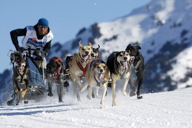 Schlittenhunderennen Pirena 2006: Spanier bricht deutsche Siegesserie