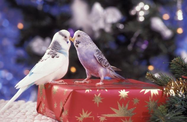 Tiere sollten an Weihnachten kein Überraschungsgeschenk sein.  Veröffentlichung in Verbindung mit Pressemeldung  honorarfrei. Copyright: WZF / Ulrike Schanz