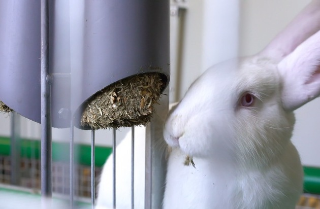 Kaufland stellt bundesweit einmaliges Kaninchen-Projekt vor Wie können Tierkomfort und