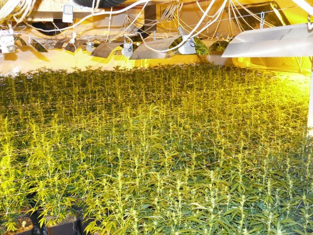 POL-DN: Illegaler Drogenanbau in Binsfeld aufgeflogen