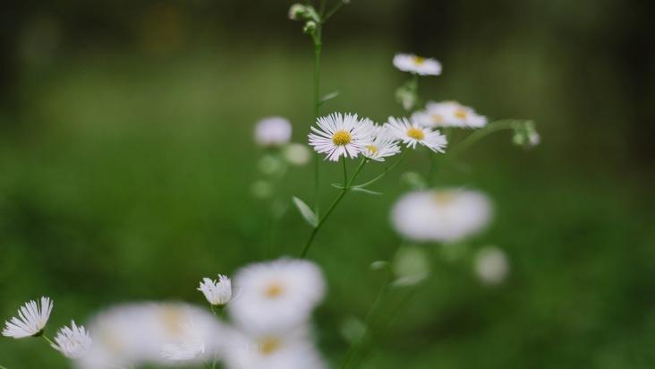 Wiesenblumen im FriedWald Dudenhofen (Foto: FriedWald GmbH, zur freien Verfügung)