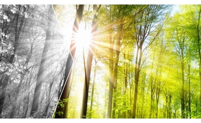 Foto_Aus Grau wird Grün