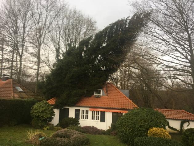 Orkan Friederike - Mettmann, Diepensiepen