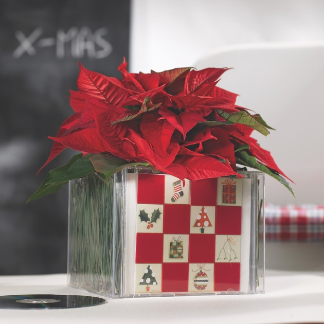 Aus alt wird neu! Kreative Upcycling-Ideen mit dem Weihnachtsstern