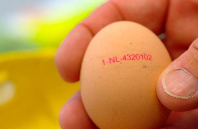 Gefälschte Eier